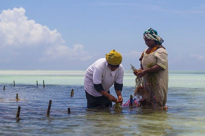 Join the IORA webinar on Thursday 24 January 2019 on Women's Economic Empowerment in the Blue Economy